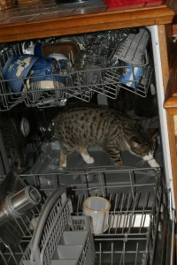 Louloute passe au lave-vaisselle