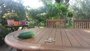 Concombre Story 1